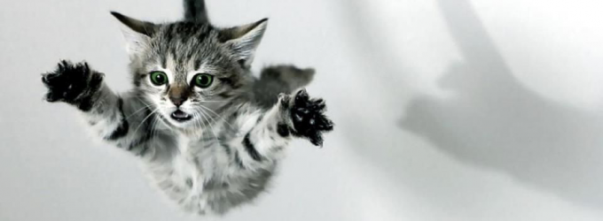 Flying-Kitty
